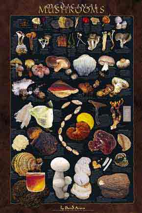 Medicinal Mushrooms Posters